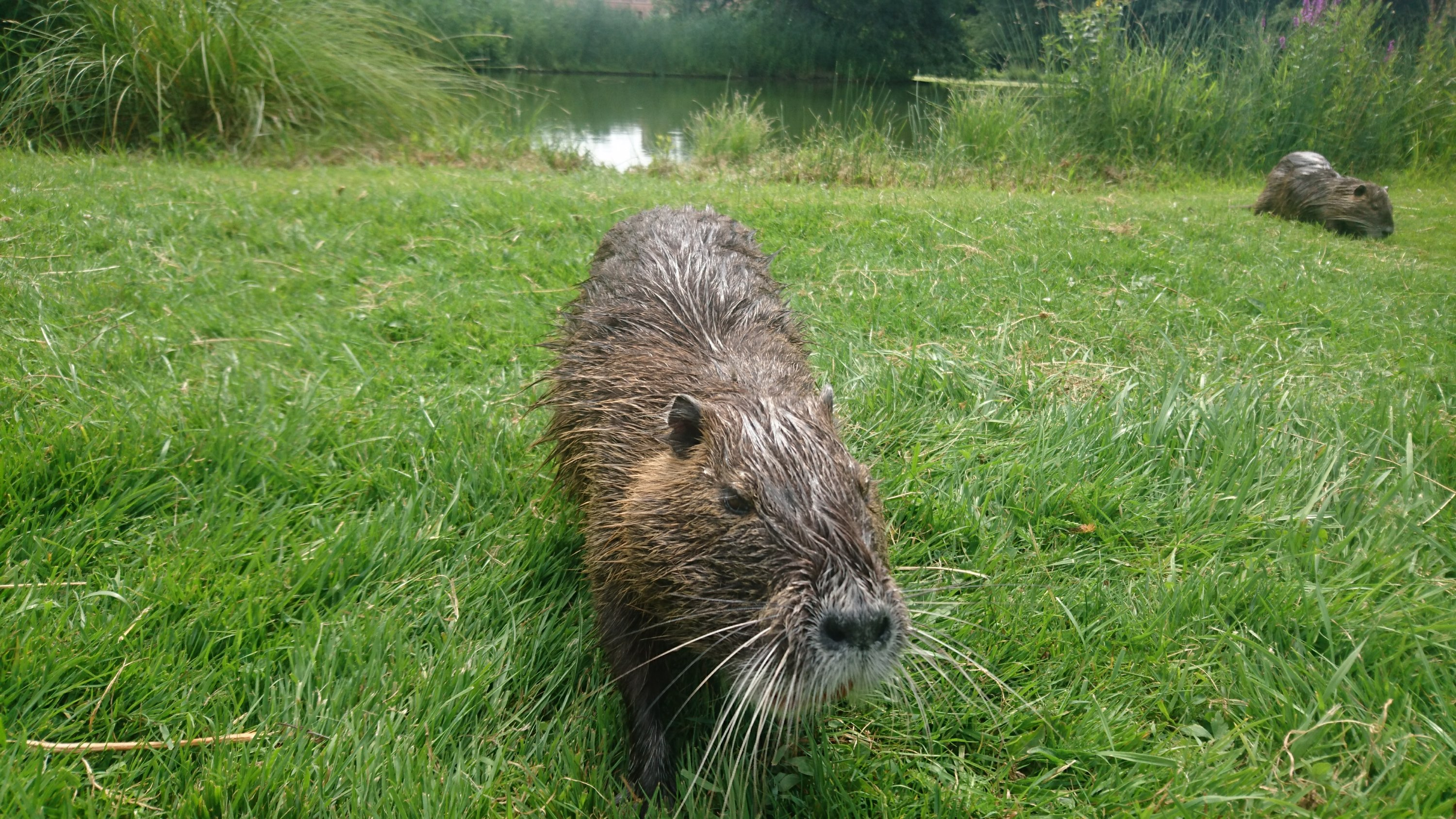 I MADE FRIENDS WITH THE NUTRIA!