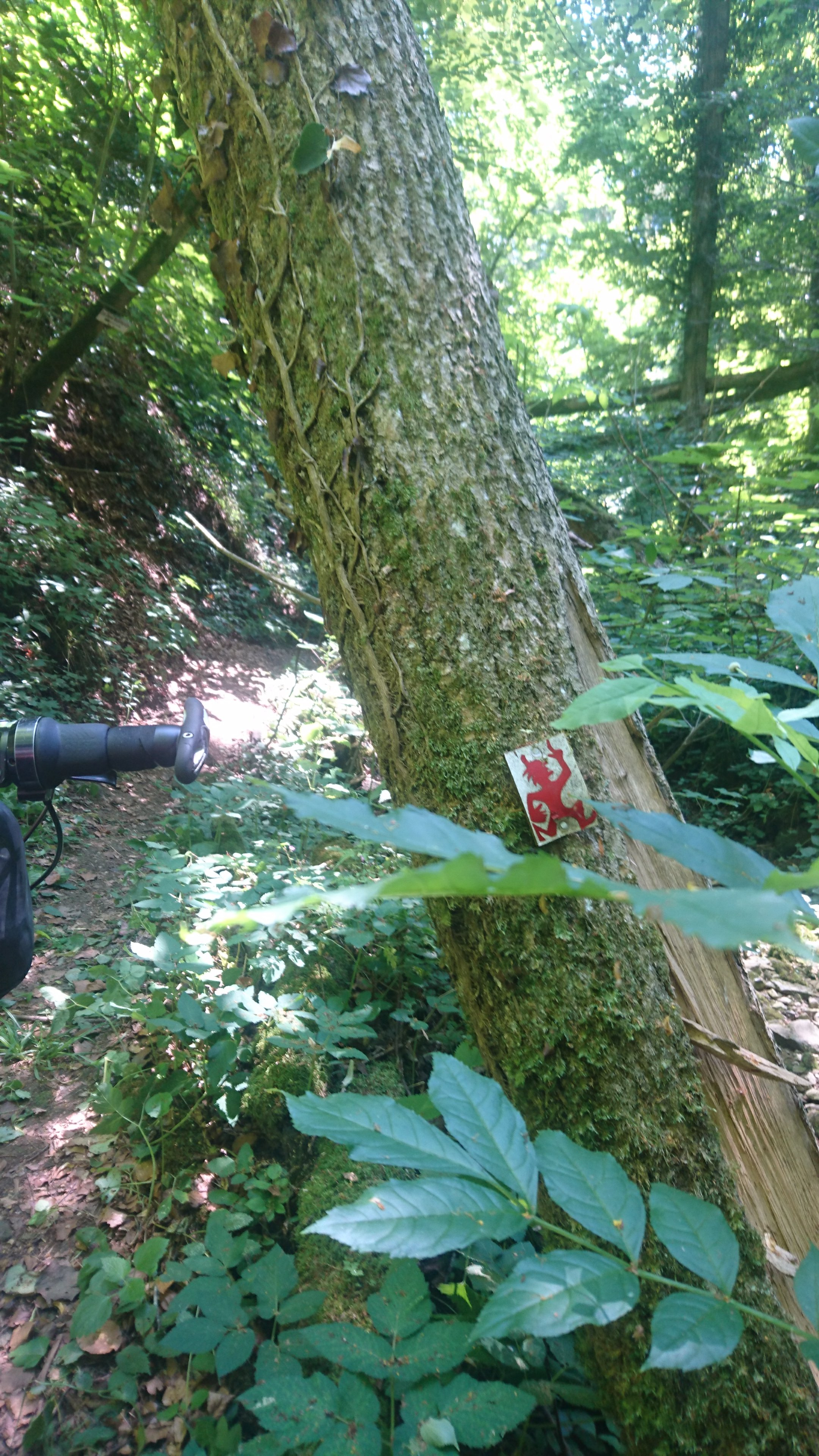 Sign on tree of Devil marking the trail