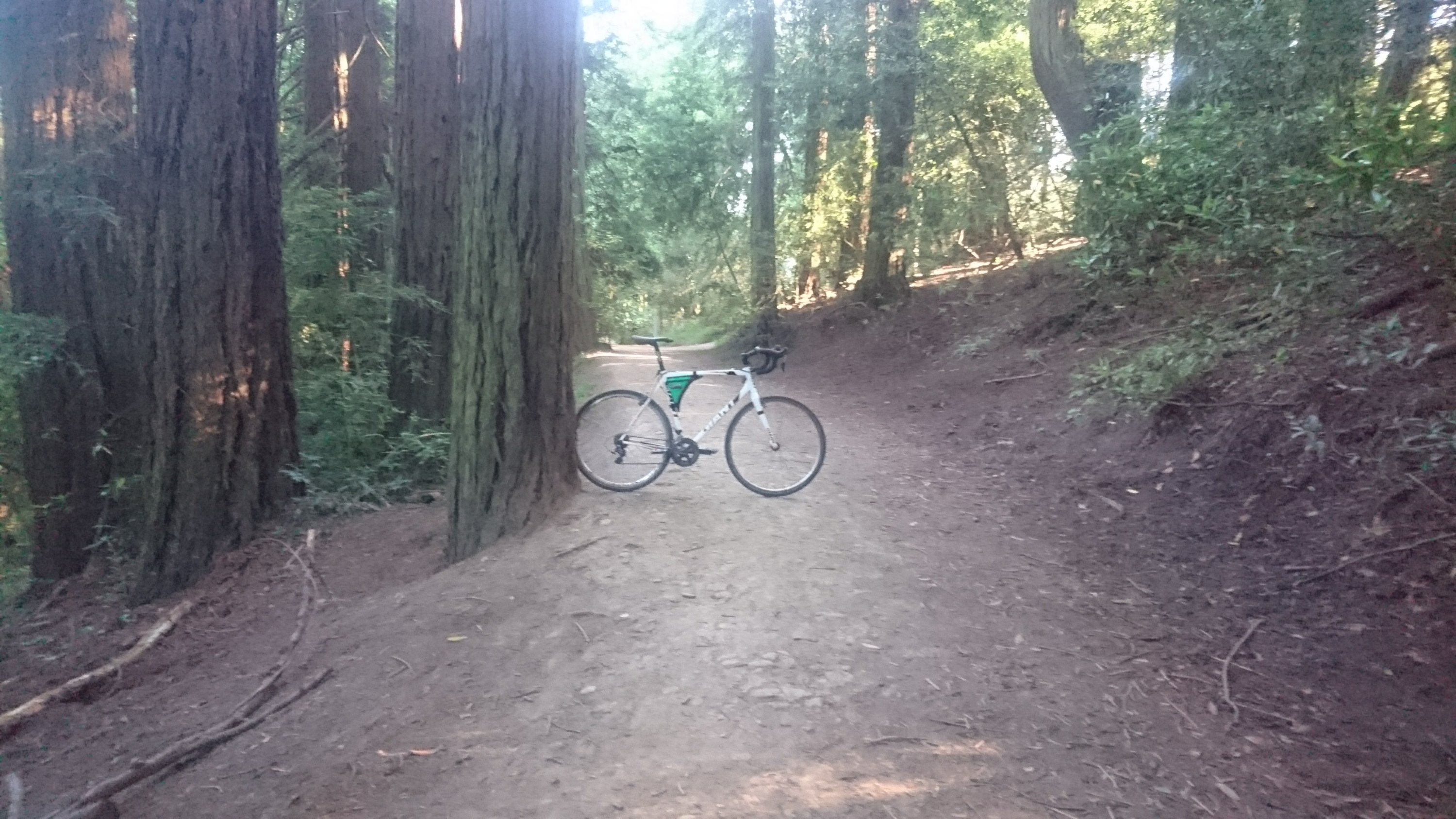 Bike on trail in redwoods.
